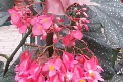 Ziedi oranžērijā